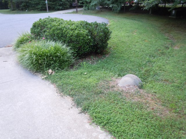 Other side of driveway before